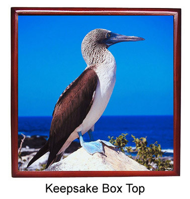 Blue Footed Booby Keepsake Box
