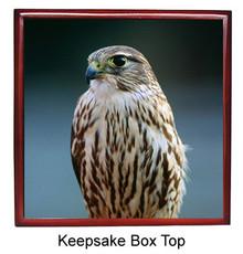 Falcon Keepsake Box
