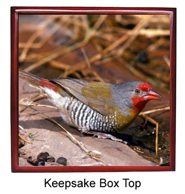 Finch Keepsake Box