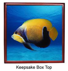Blue Girdled Angelfish Keepsake Box
