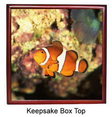 Clownfish Keepsake Box