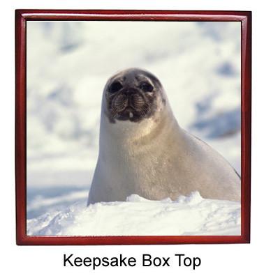 Seal Keepsake Box