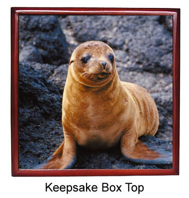Sea Lion Keepsake Box