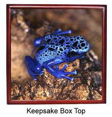 Blue Frog Keepsake Box