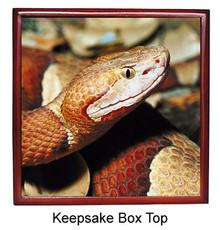 Copperhead Snake Keepsake Box