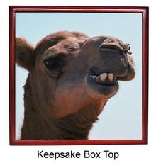 Camel Keepsake Box