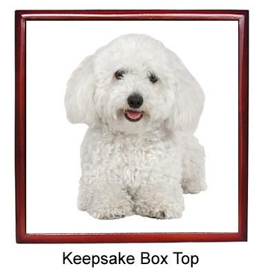 Bichon Keepsake Box
