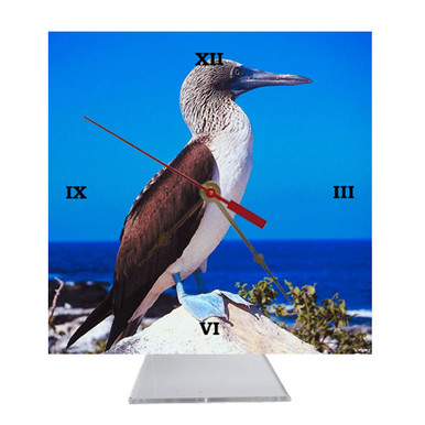 Blue Footed Booby Desk Clock