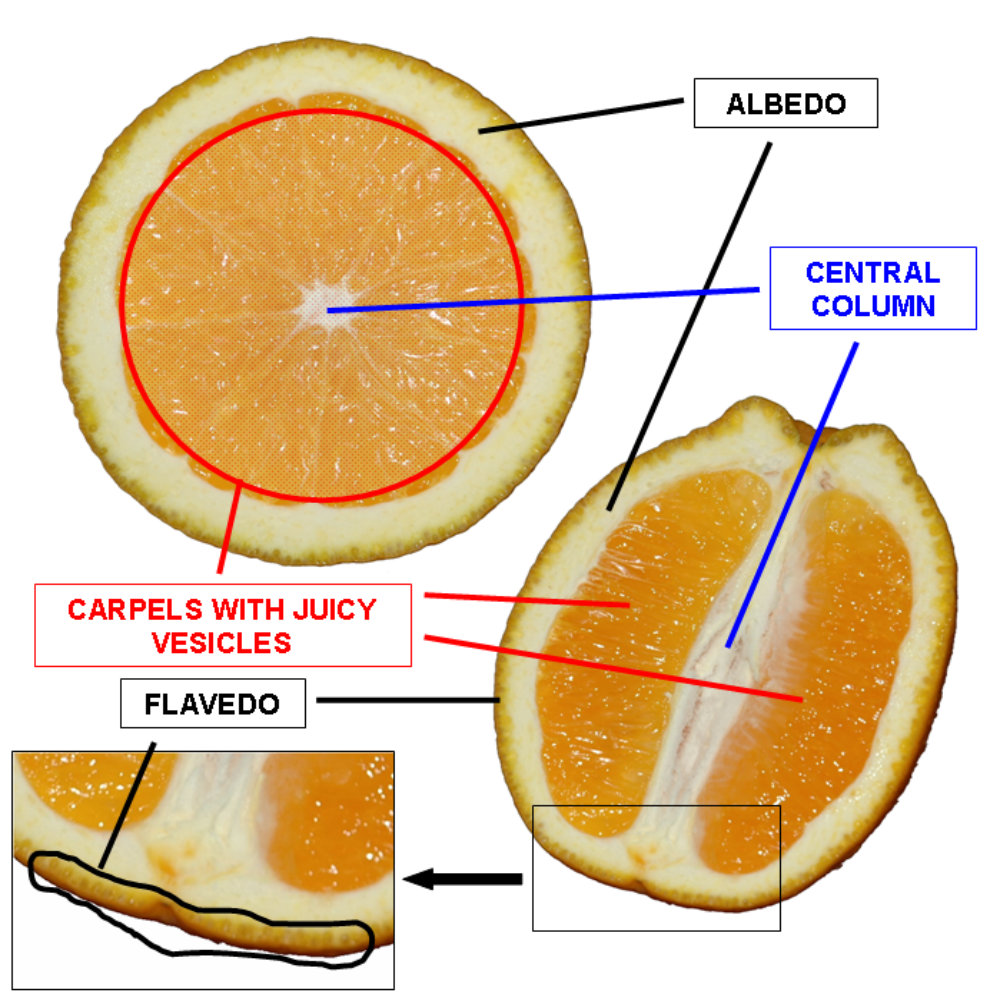 Orange cross section