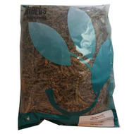 Shizonepeta (Jing Jie) - Organic Cut Form 1 lb. - Nuherbs Brand