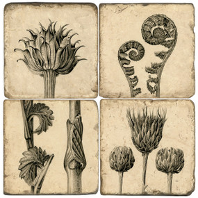 Black and White Ink Botanical Illustrations