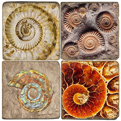 Ammonite Fossil Coaster Set Printed on Italian Marble