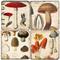 Mushroom Botanical Coaster Set.  Handmade Marble Giftware by Studio Vertu.