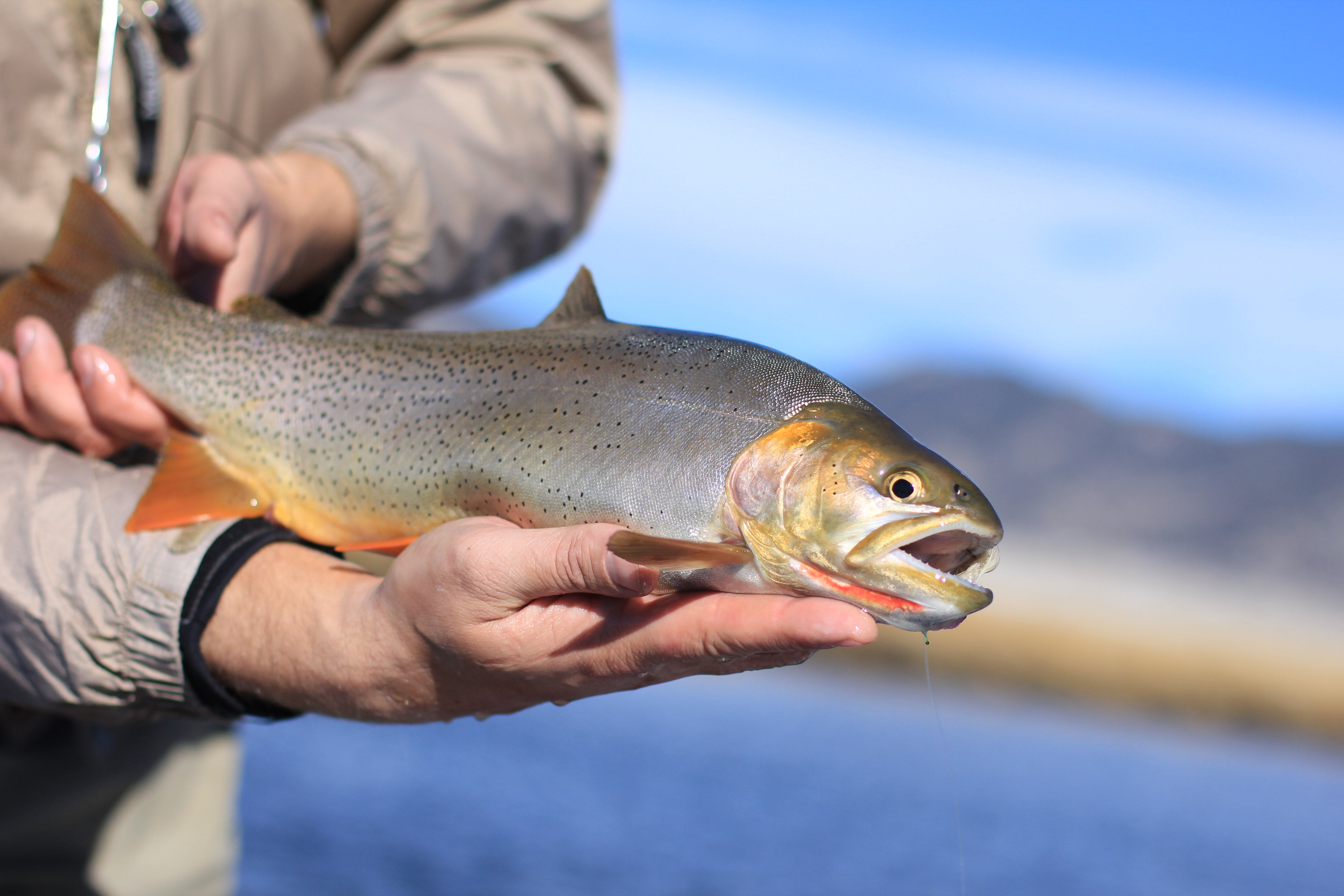 Blog for Ascent fly fishing