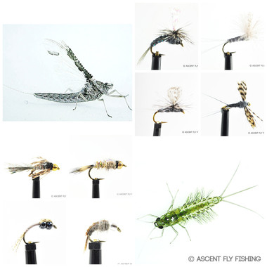 Callibaetis Mayfly Selection