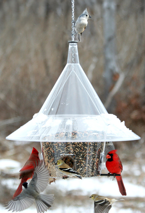 The BEST Mandarin Bird Feeder A la Carte - includes dividers