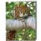 Jaguar Squirrel Cards | Boxed Set of 8 |Undiscovered Squirrels