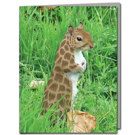 Giraffe Squirrel Cards | Boxed Set of 8 |Undiscovered Squirrels