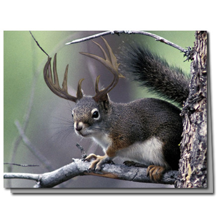 Deer Squirrel Cards   Boxed Set of 8  Undiscovered Squirrels
