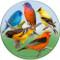 Colorful Birds Sandstone Ceramic Coaster | Front