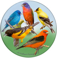 Colorful Birds Sandstone Ceramic Coaster | Front