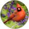 Summer Cardinal Sandstone Ceramic Coaster | Front