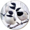 Winter Chickadee Sandstone Ceramic Coaster | Front