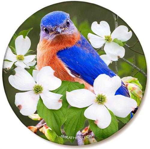 Bluebird on Dogwood Sandstone Ceramic Coaster | Front