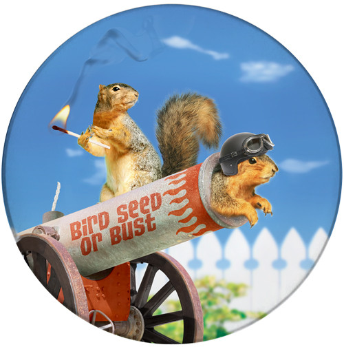 Bird Seed of Bust Sandstone Ceramic Coaster   Cannon Squirrel   Front
