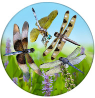 Lucky Dragonfly  Sandstone Ceramic Coaster | Dragonfly Coaster | Front