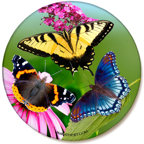 Variety Butterfly Cone Flower Sandstone Ceramic Coaster | Butterfly Coaster | Front