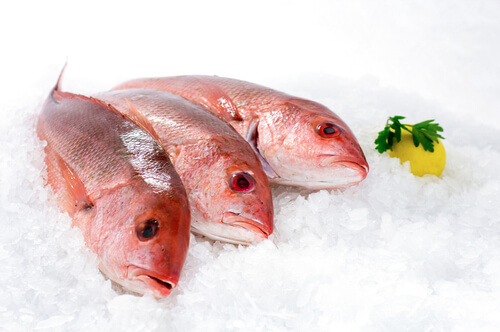 Three frozen snapper fish