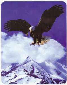 KING Korean Made Mountain Eagle Plush Raschel Blanket