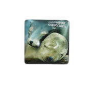 Sea Lion Magnet