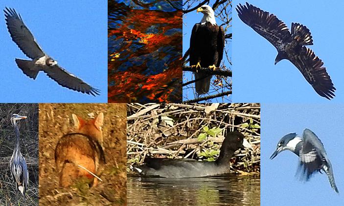 Wildlife on the Maquoketa