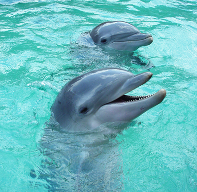 dolphins2.png