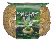 Barley Straw Planter Med 8oz