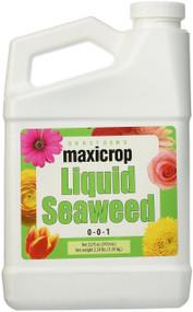 Seaweed Qt.