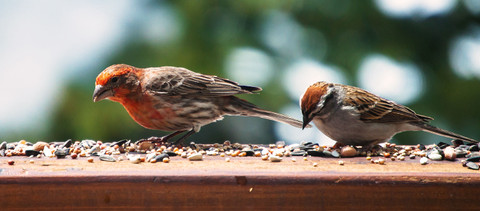 How to Choose The Right Feeder for the Birds You Want to Attract