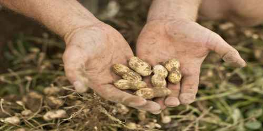 Virginia Peanut Farm Celebrates National Peanut Day!