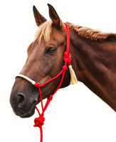 NOTE: This product image was supplier-provided and is a good example of how NOT to tie the halter (please note proper knot tying and halter fitting in the third & fourth pictures here). This halter should also ideally be tied more snugly beneath the horse's jaw.