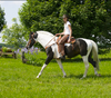 Treeless saddles offer freedom of movement in the shoulders area of your horse while allowing you to feel more connected as a rider.