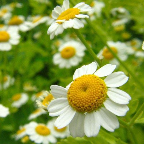 A Tiny Flower's Secret