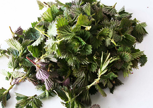 Cleaning and getting ready to dry our Nettle leaves