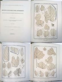 Rare Paleobotany Book: Heer, Oswald; Beiträge zur fossilen Flora Spitzbergens 1876.