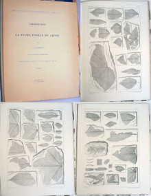 Rare Paleobotany Book: Nathorst , Alfred Gabriel; Contributions à la flore fossile du Japon, 1883.