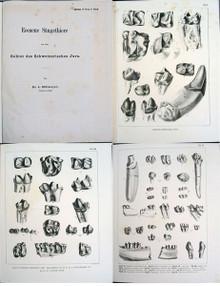 Rare Paleontology Book: Rutimeyer, Ludwig; Eocene Saugethiere aus dem Gebiet des Schweizerischen Jura. 1862