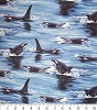 Killer Whales- Fabric for special needs bibs