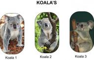 Koala Tags
