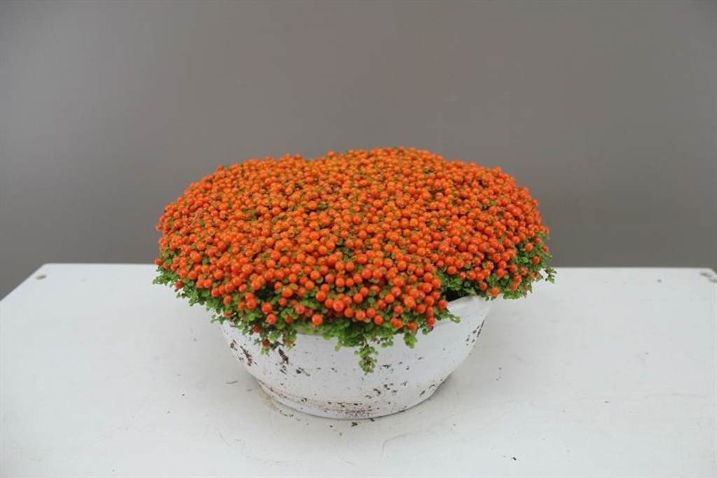 Tropical Flowers in Bowl